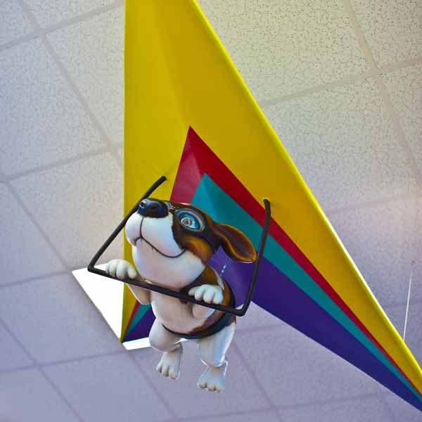 office tour of Smiling Seal Pediatric Dentistry hang gliding dog